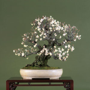 pot bonsaï céramique émaillé beige