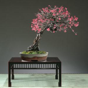 pot bonsaï céramique émaillé gris