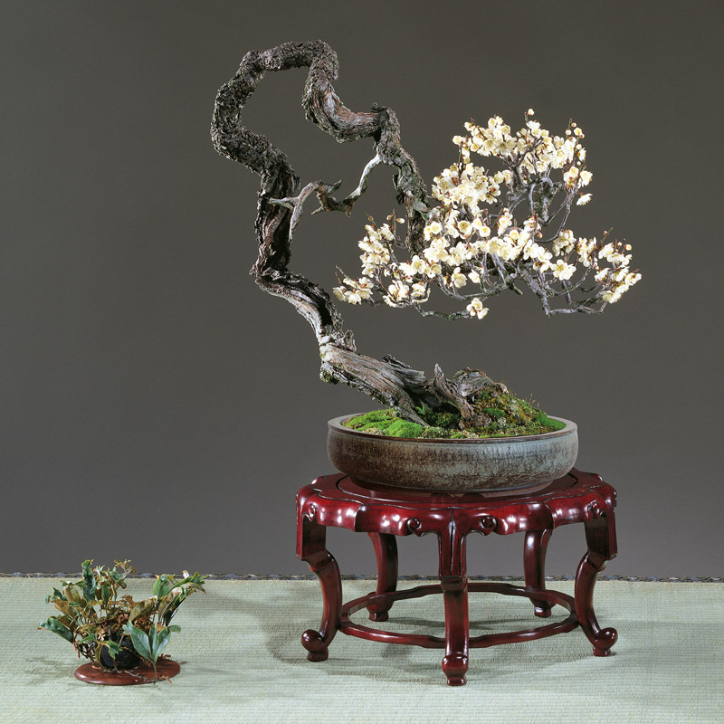 pot-bonsai-craquele-gris